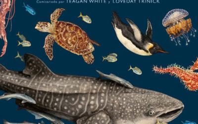 Una mirada literaria  a los océanos – La Verdad – «Oceanarium», de Teagan White y Loveday Trinick