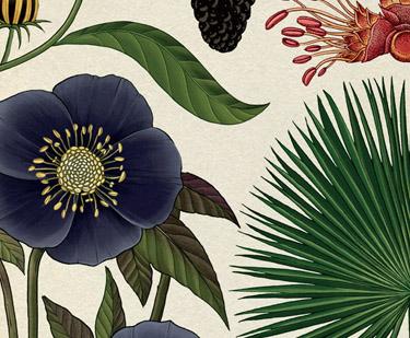 Sugerencias para introducir a niños y jóvenes en la botánica y la naturaleza a través de los libros